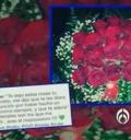 Rosas para Danna Paola