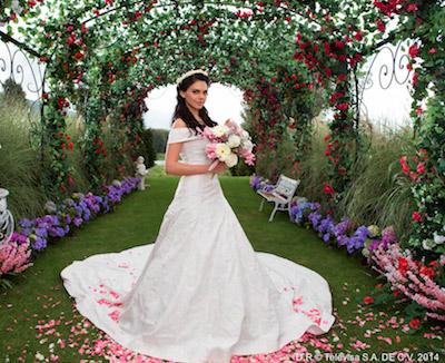Livia Brito en Muchacha italiana viene a casarse